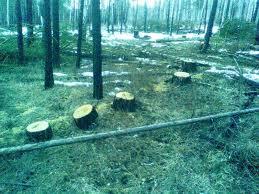 Прокуратура и экологи отслеживают незаконную порубку деревьев в Запорожской области