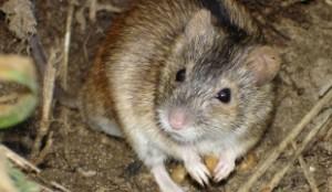 В Донецкой области наркоманы зарыли кореша, погрызенного мышами
