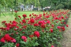 Из Мелитопольского мясокомбината украли... розы