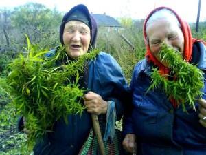 Крымской пенсионерке не дали прожить до ста лет, отобрав у нее марихуану