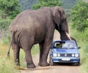 Слоны атакуют ученых и полицейских