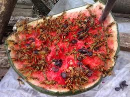 В Запорожской области лютуют осы: 8 детей попали в больницу