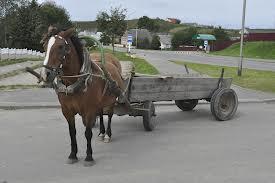 В Ровенской области трактор наехал на владельца лошади
