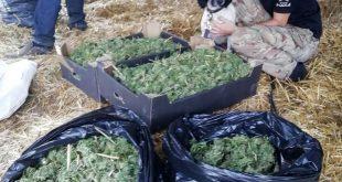 Арестовали наркодиллеров с партией канабиса
